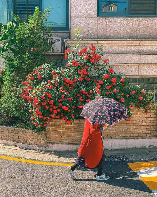 Chỉ là những bức ảnh trong trẻo chụp hiên nhà trên đường phố Nhật Bản nhưng chắc chắn sẽ khiến bạn cảm thấy bình yên - Ảnh 9.