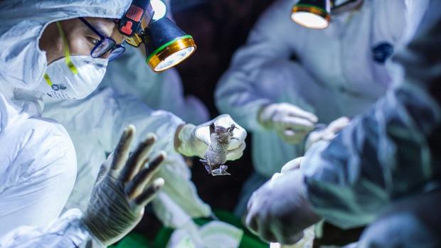 Nghiên cứu mới xác định virus corona Vũ Hán có thể lây lan cực nhanh trong bệnh viện và đây là ý nghĩa của nó - Ảnh 5.