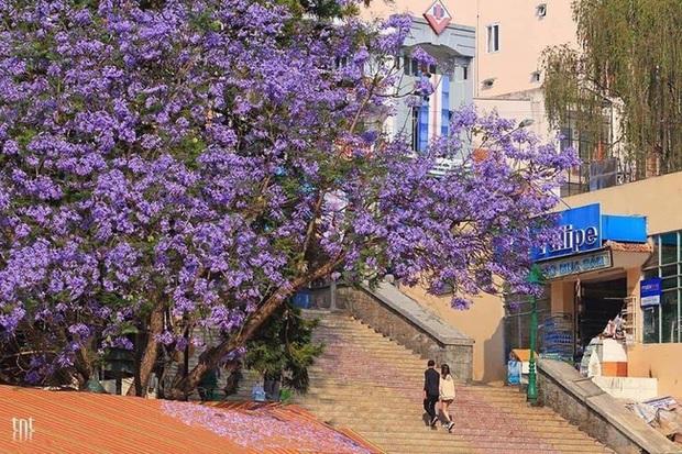 Đà Lạt mộng mơ mùa hoa phượng tím nở rộ, chị em không đi thì sẽ hối tiếc vô cùng - Ảnh 1.
