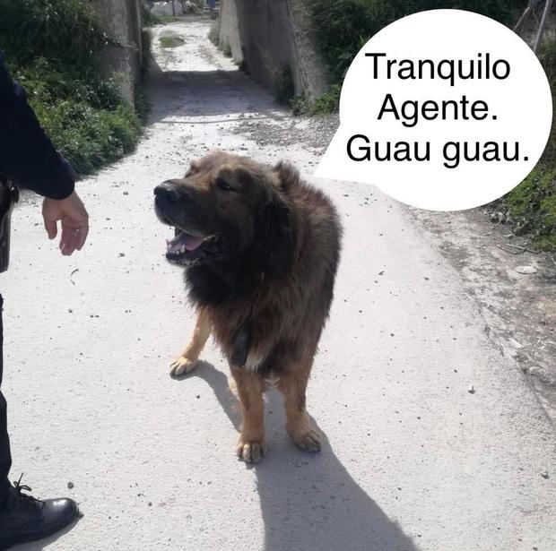 Chó rụng lông đi lông nhông quanh phố, người dân hoảng sợ tưởng sư tử xổng chuồng - Ảnh 2.