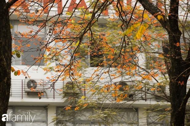 Hà Nội tháng Ba mà cứ ngỡ thu về, bởi vừa có nắng vàng dịu ngọt, vừa có thảm lá vàng đi lạc sau giấc ngủ đông - Ảnh 3.