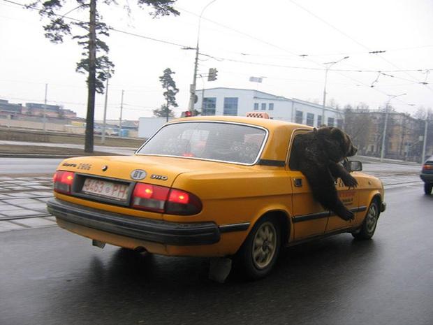 Một ngày bình thường như cân đường của người dân vui tính tại nước Nga xa xôi - Ảnh 2.