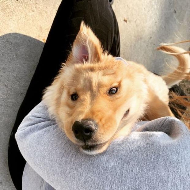 Con kỳ lân vàng: Chú chó chỉ có một cái tai thu hút sự chú ý của dân mạng vì vẻ ngoài kỳ lạ nhưng rất đáng yêu - Ảnh 2.