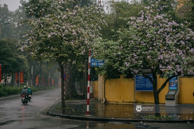 Hà Nội tháng 3 vẫn đẹp đến nao lòng dù đang giữa mùa dịch: ngắm ảnh lộc vừng thay lá, sữa nở, bàng đâm chồi mà thấy sao an yên - Ảnh 11.