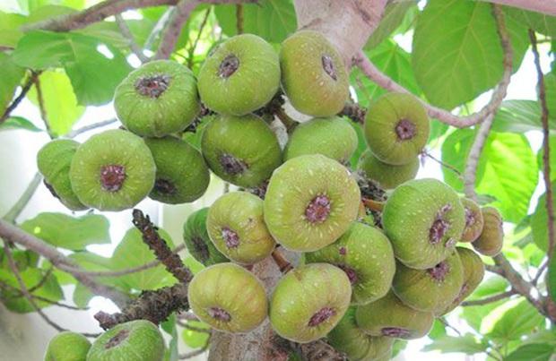 Một loại quả đỏ mọng là đặc sản tuổi thơ của người Việt nhưng không phải ai cũng còn nhớ trong thời nay - Ảnh 1.