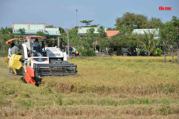 Cận cảnh hạn mặn khốc liệt nhất lịch sử ở Tây Nam Bộ - Ảnh 7.