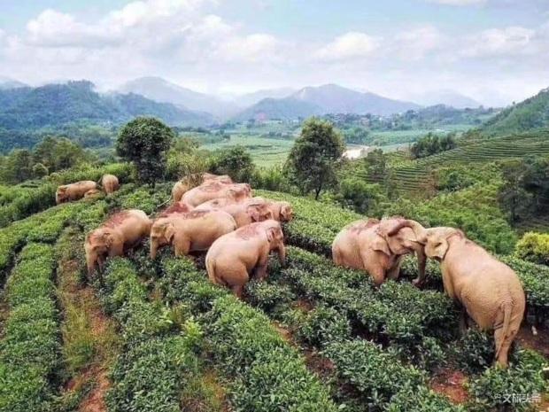 Buồn đời, hai chú voi mượn rượu giải sầu rồi say bí tỉ nằm ôm nhau trong bụi cây - Ảnh 2.