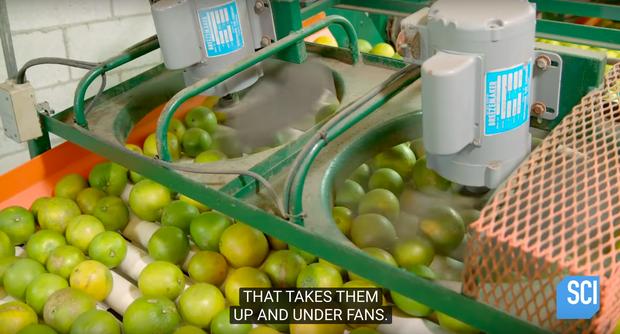 """Cận cảnh quy trình làm nước cam vắt trong nhà máy công suất lớn, cực đã mắt với công đoạn """"nghiền nát"""" quả cam mọng nước - Ảnh 5."""