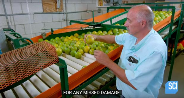 """Cận cảnh quy trình làm nước cam vắt trong nhà máy công suất lớn, cực đã mắt với công đoạn """"nghiền nát"""" quả cam mọng nước - Ảnh 6."""