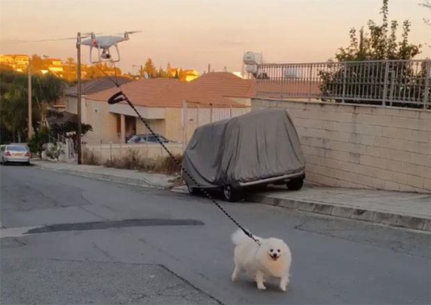 Dắt chó trong mùa dịch Covid-19 theo cách không tưởng: Dùng drone bao xịn bao ngầu! - Ảnh 2.