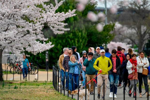 Bỏ ngoài tai những khuyến cáo về dịch bệnh Covid-19, hàng ngàn người dân Nhật vẫn tụ tập ngắm hoa anh đào và xem kickboxing - Ảnh 6.