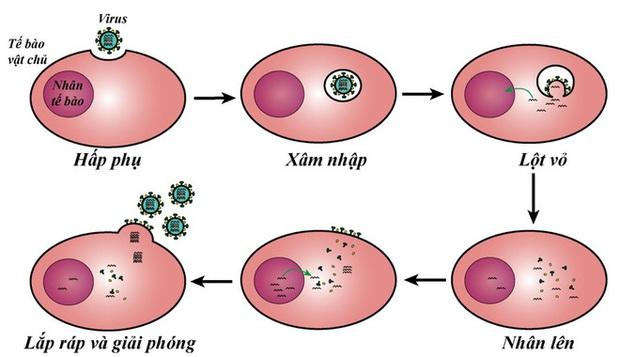 TS Nguyễn Quốc Thục Phương: Nắng nóng mùa hè có giết được virus gây bệnh COVID-19 không? - Ảnh 4.