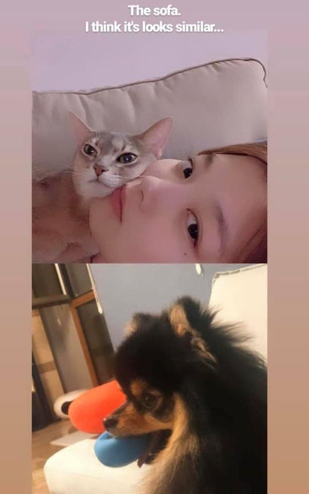 Soi 1001 bằng chứng V (BTS) và Kim Yoo Jung hẹn hò: Đồ đôi, sở thích trùng hợp đến lạ và những lần tương tác quá đáng ngờ - Ảnh 12.