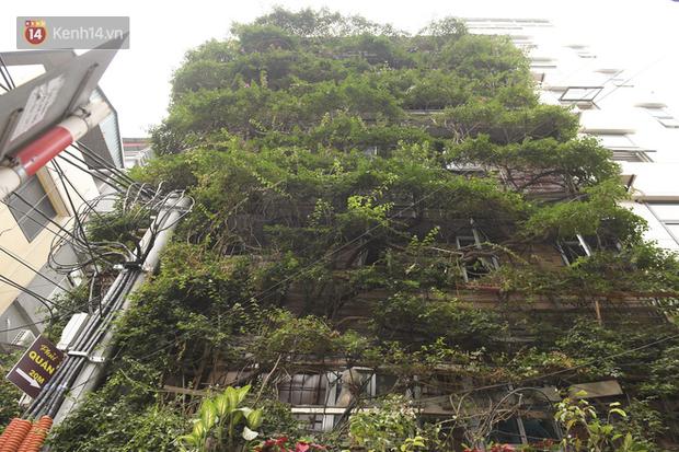 Ngắm ngôi nhà 5 tầng phủ kín cây hoa giấy của nguyên giảng viên Đại học Xây dựng Hà Nội, ai đi qua cũng sững sờ - Ảnh 4.