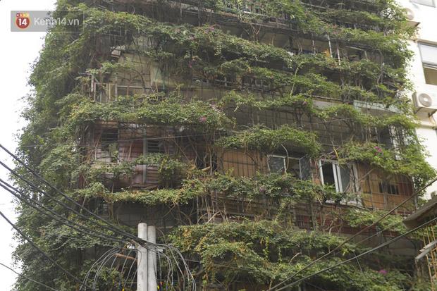 Ngắm ngôi nhà 5 tầng phủ kín cây hoa giấy của nguyên giảng viên Đại học Xây dựng Hà Nội, ai đi qua cũng sững sờ - Ảnh 9.