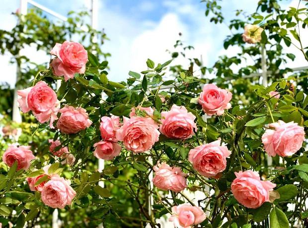 Bà xã MC Quyền Linh khoe vườn hoa, nhưng ai cũng dán mắt vào 2 cô con gái xinh đẹp, cao ráo như hoa hậu tương lai - Ảnh 5.