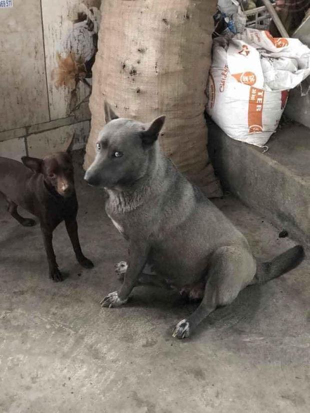 Sự thật về hình ảnh mẹ chú chó idol Nguyễn Văn Dúi, dân tình còn ngỡ ngàng vì giống nhau từ lông đến biểu cảm - Ảnh 2.