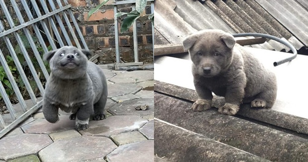 Sự thật về hình ảnh mẹ chú chó idol Nguyễn Văn Dúi, dân tình còn ngỡ ngàng vì giống nhau từ lông đến biểu cảm - Ảnh 1.