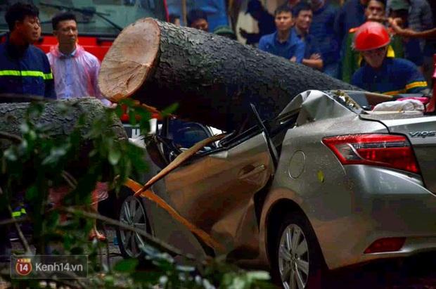 Hà Nội: Cây cổ thụ bật gốc vì mưa lớn, đè nát ô tô đậu trên vỉa hè - Ảnh 1.