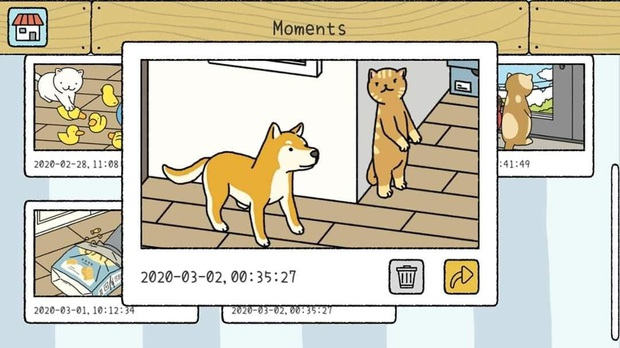 Cười sái hàm với loạt khoảnh khắc pose ảnh lầy lội trong Adorable Home, những chú mèo sao lại đáng yêu thế này! - Ảnh 5.