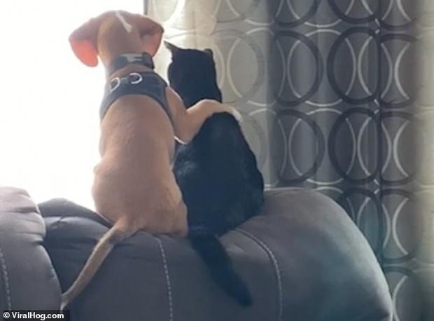 Chó khoác vai mèo cùng ngồi ngắm cảnh ngoài cửa sổ cực tình tứ khiến dân mạng thòng tim vì quá đáng yêu - Ảnh 2.