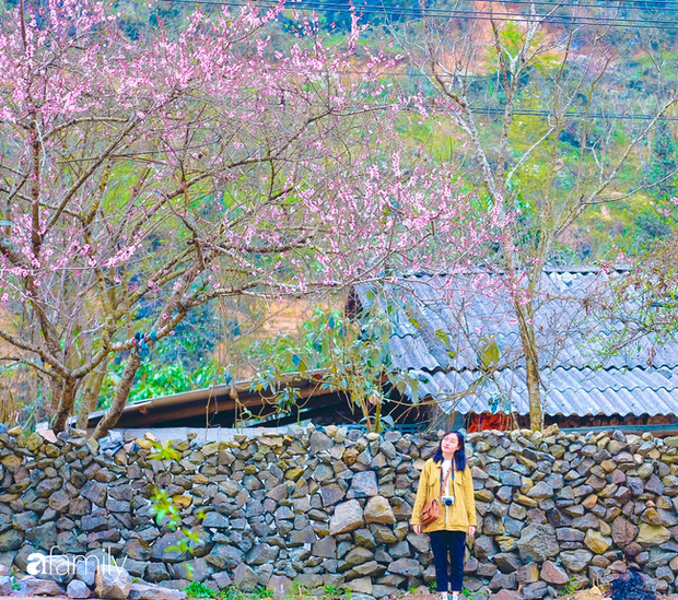 Hà Giang tháng 3 đẹp mê hồn trong mắt cô gái trẻ xứ Thanh, thật khó tin khi 4 loài hoa núi rừng đủ sắc màu cùng nở một lúc - Ảnh 2.