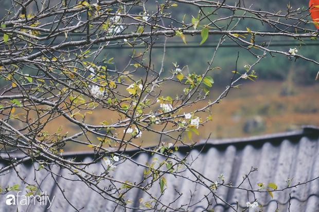 Hà Giang tháng 3 đẹp mê hồn trong mắt cô gái trẻ xứ Thanh, thật khó tin khi 4 loài hoa núi rừng đủ sắc màu cùng nở một lúc - Ảnh 7.