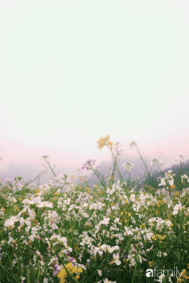 Hà Giang tháng 3 đẹp mê hồn trong mắt cô gái trẻ xứ Thanh, thật khó tin khi 4 loài hoa núi rừng đủ sắc màu cùng nở một lúc - Ảnh 9.
