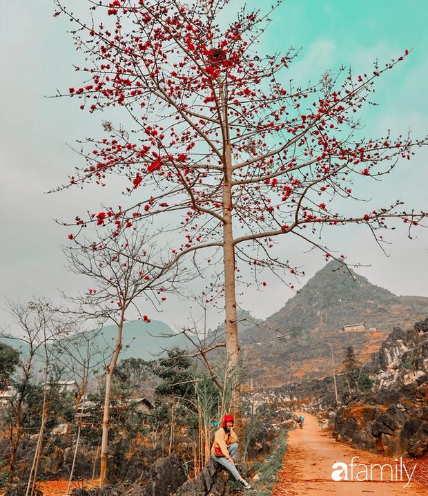 Hà Giang tháng 3 đẹp mê hồn trong mắt cô gái trẻ xứ Thanh, thật khó tin khi 4 loài hoa núi rừng đủ sắc màu cùng nở một lúc - Ảnh 10.