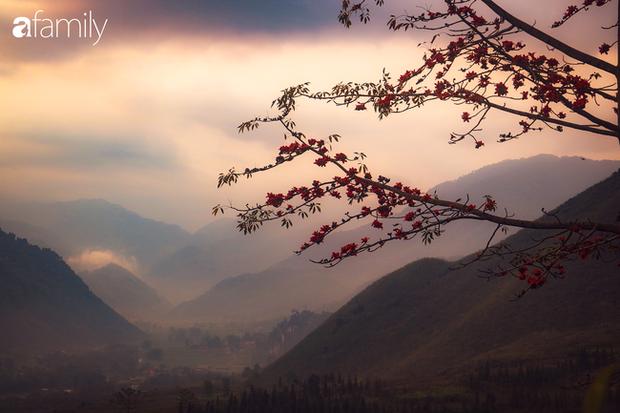 Hà Giang tháng 3 đẹp mê hồn trong mắt cô gái trẻ xứ Thanh, thật khó tin khi 4 loài hoa núi rừng đủ sắc màu cùng nở một lúc - Ảnh 11.
