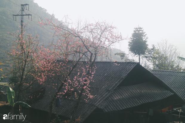 Hà Giang tháng 3 đẹp mê hồn trong mắt cô gái trẻ xứ Thanh, thật khó tin khi 4 loài hoa núi rừng đủ sắc màu cùng nở một lúc - Ảnh 21.