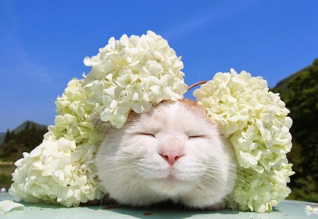 Chú mèo Shironeko huyền thoại đã qua đời, gia đình chọn đúng ngày sinh nhật 18 tuổi để công bố tin buồn - Ảnh 1.