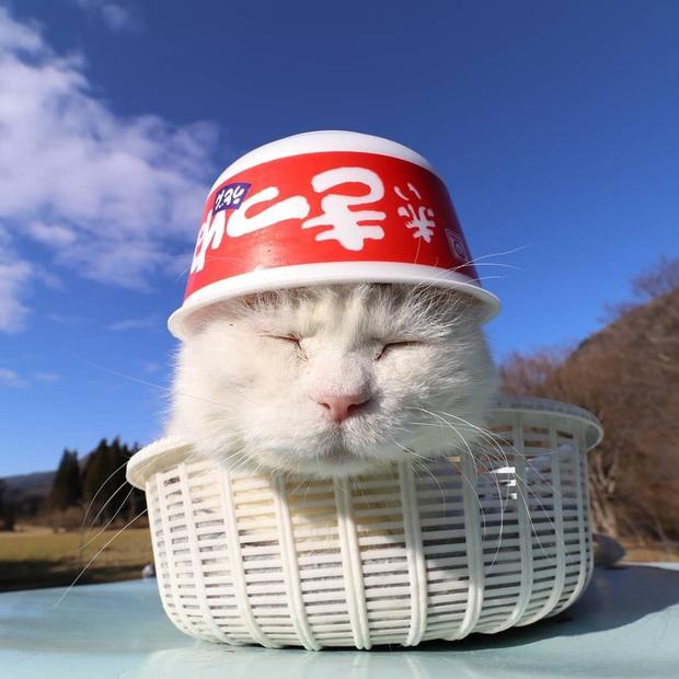 Chú mèo Shironeko huyền thoại đã qua đời, gia đình chọn đúng ngày sinh nhật 18 tuổi để công bố tin buồn - Ảnh 6.