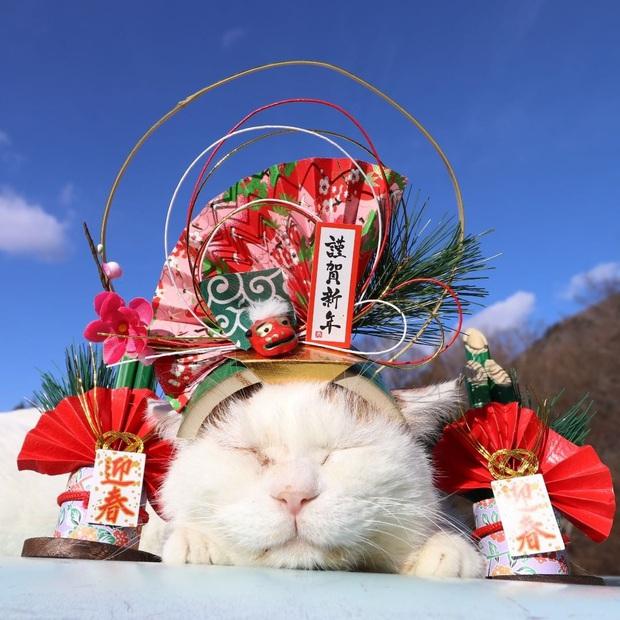Chú mèo Shironeko huyền thoại đã qua đời, gia đình chọn đúng ngày sinh nhật 18 tuổi để công bố tin buồn - Ảnh 2.
