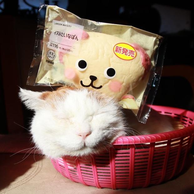 Chú mèo Shironeko huyền thoại đã qua đời, gia đình chọn đúng ngày sinh nhật 18 tuổi để công bố tin buồn - Ảnh 5.