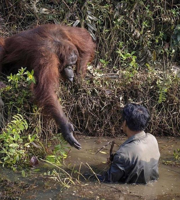 Những pha hành động thần sầu của động vật khiến con người nhiều phen phải há hốc mồm vì ngạc nhiên - Ảnh 5.