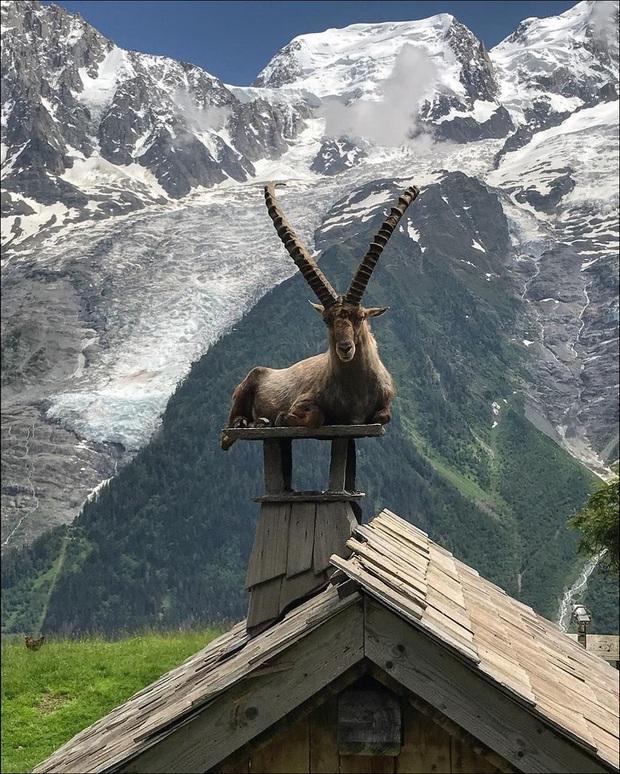 Những pha hành động thần sầu của động vật khiến con người nhiều phen phải há hốc mồm vì ngạc nhiên - Ảnh 14.
