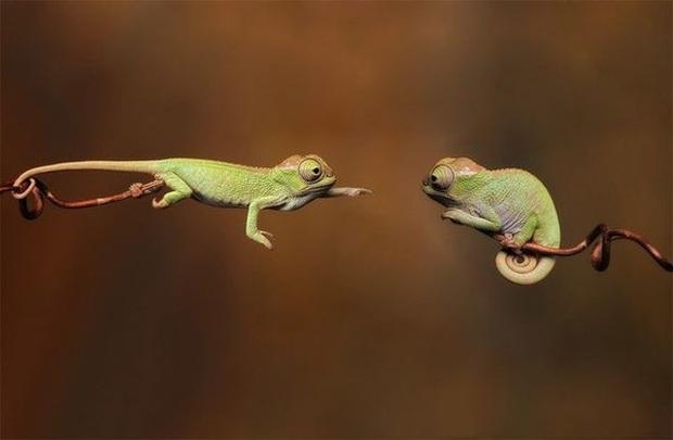 Những pha hành động thần sầu của động vật khiến con người nhiều phen phải há hốc mồm vì ngạc nhiên - Ảnh 2.