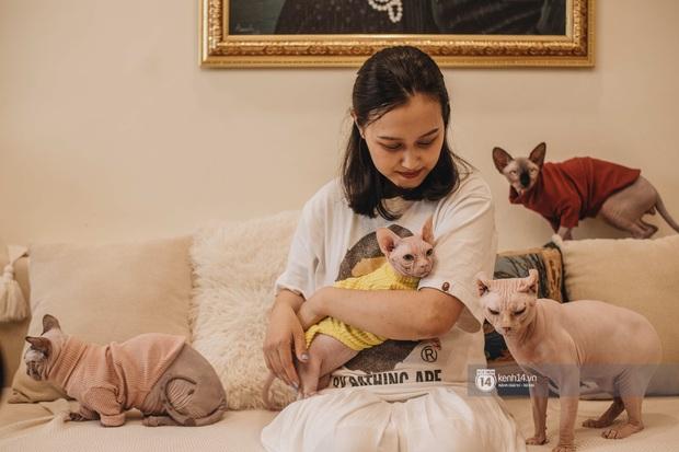 """Diện kiến đàn mèo không lông Sphynx đắt đỏ ở Hà Nội: Bên ngoài """"hổ báo cáo chồn, bên trong nhiều tiền và hiền lắm luôn - Ảnh 3."""