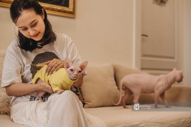 """Diện kiến đàn mèo không lông Sphynx đắt đỏ ở Hà Nội: Bên ngoài """"hổ báo cáo chồn, bên trong nhiều tiền và hiền lắm luôn - Ảnh 8."""
