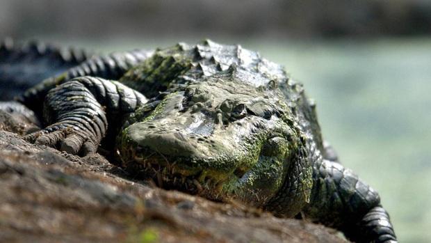 """Khi cầu thủ mê tín, từ vô hại như """"tè bậy"""" đến chết người do tắm trên dòng sông đầy cá sấu để tẩy rửa những linh hồn xấu - Ảnh 4."""
