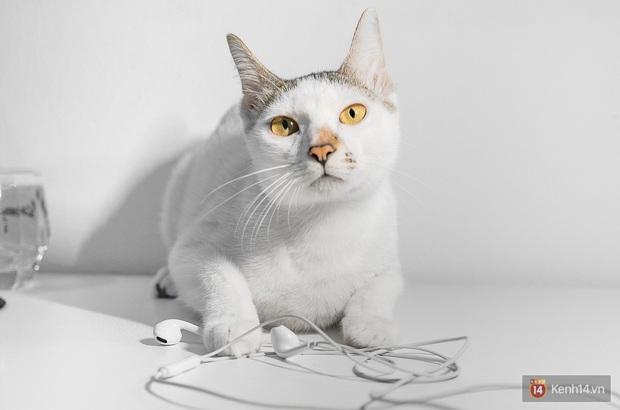 Bị boss mèo cắn đứt vài lần mới thấy, hóa ra Tim Cook và Apple đã đúng khi đẩy mạnh xu hướng tai nghe không dây! - Ảnh 7.