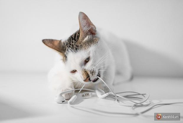 Bị boss mèo cắn đứt vài lần mới thấy, hóa ra Tim Cook và Apple đã đúng khi đẩy mạnh xu hướng tai nghe không dây! - Ảnh 2.