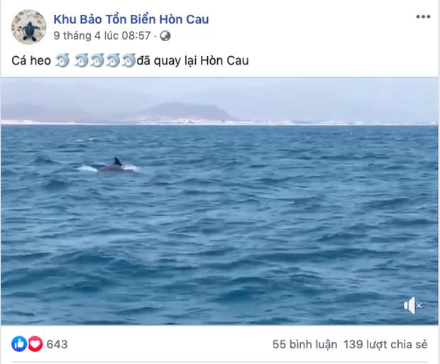 Cá heo liên tục xuất hiện tại vùng biển Nha Trang và Hòn Cau, dân mạng phấn khích khi đã lâu mới chứng kiến cảnh tượng hiếm gặp này - Ảnh 4.