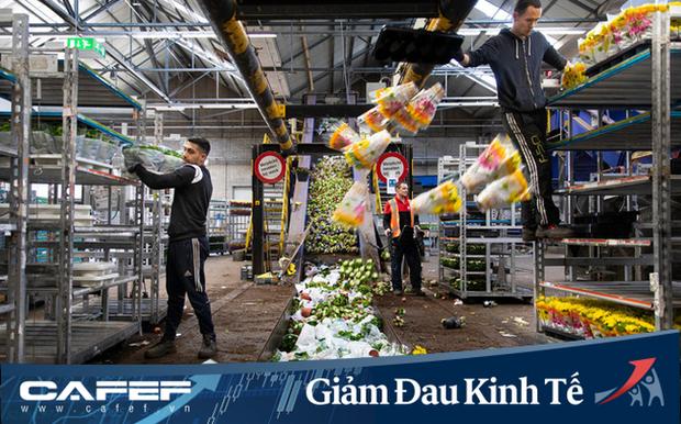 Buộc phải tiêu huỷ 140 triệu bông hoa tulip do Covid-19, từ nông dân cho đến ông chủ công ty sản xuất hoa lớn nhất Hà Lan đều đứng nhìn với sự bất lực - Ảnh 1.