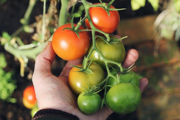 3 loại rau củ cực nhanh hỏng, không tốt cho sức khỏe, tuyệt đối không nên tích trữ lâu trong thời gian ở nhà chống dịch - Ảnh 2.