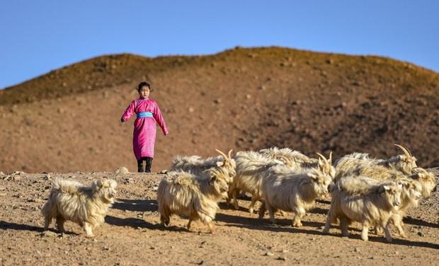 Lái xe khắp hoang mạc tìm Wi-Fi cho con gái học online trong ngày dịch Covid-19: Vì con, cha mẹ sẽ làm tất cả! - Ảnh 8.