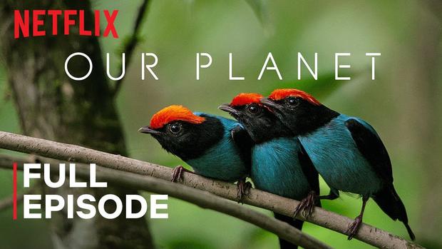 10 series phim tài liệu Netflix giúp giải tỏa cơn khát kiến thức trong những ngày ở nhà mùa Cô Vy - Ảnh 20.