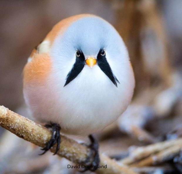 Nhìn như cục thịt di động nhưng loài chim này lại sở hữu 1 tuyệt kỹ làm xiếc siêu đẳng - Ảnh 1.