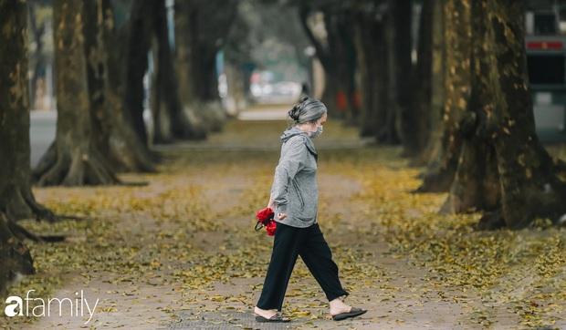 Cuối tháng 4, con phố lãng mạn nhất Hà Nội đón mùa sấu thay lá vàng rực khắp con đường - Ảnh 1.